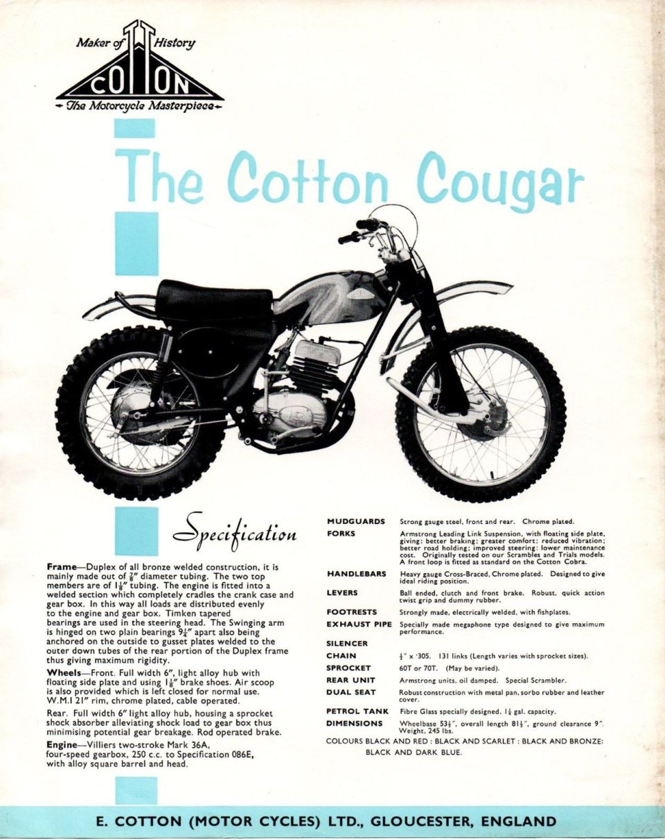Cotton Cougar